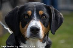 Jonge Honden Dag 25-03-2018