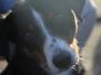 Jonge Honden Dag 03-11-2015