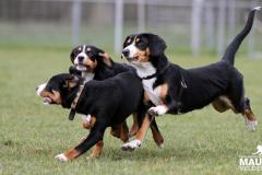 Jonge Honden Dag 15-03-2014