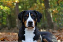 Jonge Honden Dag 28-10-2012