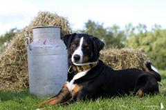 Jonge Honden Dag 22-09-2012