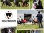 KCM 2014 Hondenfotograaf
